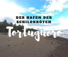 Tortuguero an der Karibikküste Costa Ricas ist ein beliebter Nistplatz der Schildkröten. Neben Babyschildkröten entdeckten wir auch Krokodile.