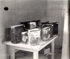 Buchenwald, Germany, Human body parts in specimen jars, after liberation.