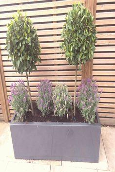 Front Porch Flowers, Front Porch Planters, Patio Planters, Flower Planters, Black Planters, Lavender Planters, Porch Plants, Trough Planters, Fence Plants