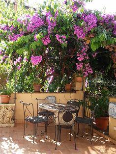 Terrace bougainvillea pergola-bower