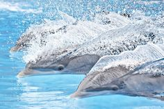 ✯ Loro Parque - Dolphins Shared by Carlos Xavier