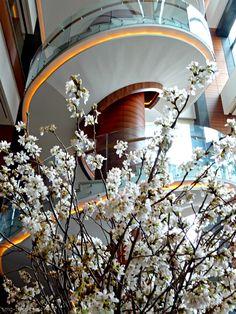 Kirschblüten und ein Hauch Treppen - http://smg-treppen.de/kirschblueten-und-ein-hauch-treppen/ Ein wahres Volksfest sind die Kirschblüten im Yeouido Park am Hangang River. Tausende Menschen treffen sich dort und feiern ein tolles Fest.