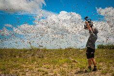The idea of being in the middle of a swarm of a billion flying locusts might bring most people out in a cold sweat, but not cameraman Rob Drewett. Using a helicopter, he and the team were able to put themselves in the flight path of this super-swarm in south west Madagascar