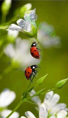 Úžasná Příroda, Pomněnky, Legrační Zvířata, Motýli, Ptáčkové, Berušky, Mravencovití