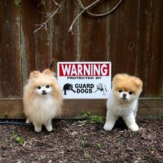 Estos carteles te dicen que tengas cuidado con estos temibles perros.