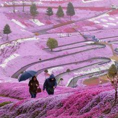 Flower fields on a hillside, Hokkaido, Japan
