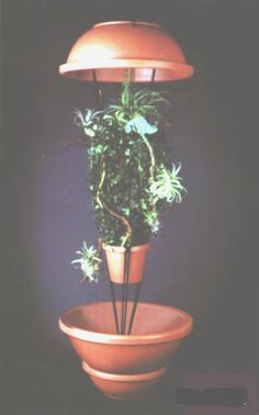 Chameleon Canopy: for free-ranging. Chameleon cannot climb from bowl, so Chameleon is contained.