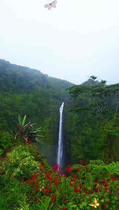 Travel Hawaii video, vacations ideas. Akaka Falls. best waterfall hikes in Hawaii. best things to do in Big Island, near hilo or day trip from kona. state park on big island waterfall hiking trail. Outdoor travel tips. beautiful places for world bucket list, wanderlust inspiration, tropical islands, pictures, photography. waterfalls in the US. usa. united states. #flashpackingamerica<br> Best way to see Akaka Falls?! PLUS things to do near Akaka Falls. HAWAII vacation ideas Beautiful Photos Of Nature, Beautiful Places To Travel, Amazing Nature, Nature Photos, Beautiful Pictures, Beautiful Landscape Wallpaper, Beautiful Landscapes, Big Island Hawaii, Landscape Photography