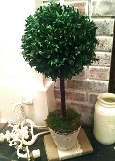 Check out this item in my Etsy shop https://www.etsy.com/uk/listing/531177690/real-preserved-boxwood-topiary