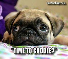 Cuddle?