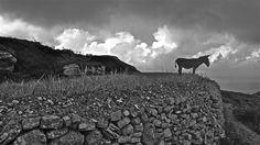 'Folegandros Donkey' by OldSchoolTraveller Donkeys, Mountains, Nature, Ears, Photographs, Travel, Naturaleza, Viajes, Photos