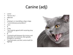 canine meaning #gre #cat #vocabulary