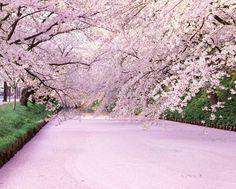 弘前城 桜 - Google 検索