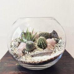 Cactus Terrarium with crystals from Bioattic