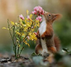 """""""Good days and bad days are a part of life. Stop positive and you'll always be happy. Primates, Mammals, Cute Little Animals, Cute Funny Animals, Animals And Pets, Baby Animals, Animal Pictures, Cute Pictures, Congratulations Photos"""