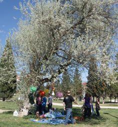 Bonito árbol para hacer un picnic