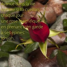 #citation Avance dans la #vie comme si tu cueillais chaque jour une #rose magnifique en prenant bien garde à ses #épines.