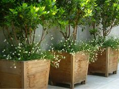 Outdoor plants, ideas for a dream garden! Finding outdoor plants that tolerate climate change can sometimes be a bit complicated. It also happens in cases where we have decided to aerate our garden with plants that tolerate the shade. Large Outdoor Planters, Wooden Planters, Planter Boxes, Planter Ideas, Wooden Containers, Large Containers, Large Planters For Trees, Trees In Pots, Big Planters