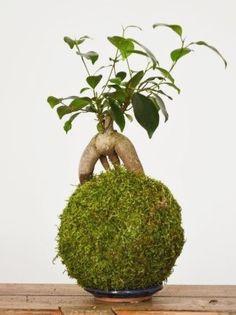 ♣ᴥYour #bonsai inspiration for the day!♣֍ #BonsaiInspiration