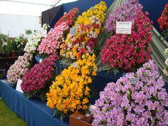 Horticultural Display by Holker Group, via Flickr