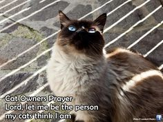 Cat Owners Prayer | Vita da gatto