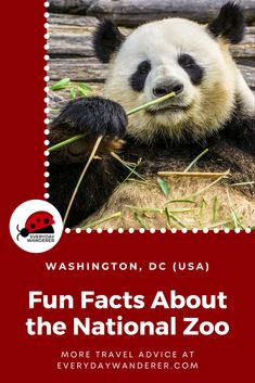 Fun facts about the National Zoo in Washington DC. Part of the Smithsonian Museum, the Smithsonian Zoo in Washington DC is one of the most popular things to do in Washington DC with Kids. From how is began to its most popular residents (like Smokey Bear and giant pandas), these zoo facts and zoo fun facts may surprise you. #WashingtonDC #DC #US #USA #USTravel