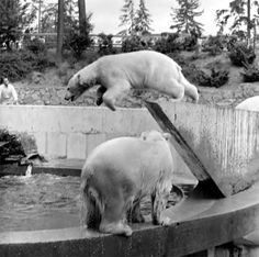Stanley Park Zoo - 1965 Stanley Park Vancouver, Vancouver Bc Canada, Vancouver Island, Local History, History Facts, Vacation Places, Historical Photos, British Columbia, West Coast