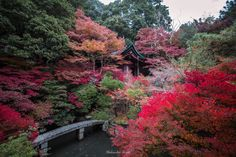 Nature gradation - Kyoto of Japan will change to colorful scenery. Japan's autumn beautiful.