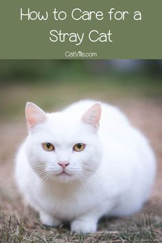 6 Easy Steps for Bringing a Stray Cat Home - CatVills Cat Care Tips, Dog Care, Pet Tips, Cat Hacks, Fancy Cats, Kitten Care, Lots Of Cats, Kittens Playing, Cat Behavior
