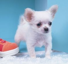 94 Best Cute Puppy Pictures Different Breeds Of Dogs Images On