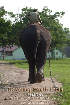Traveling South India goa mysore ooty kodaikanal munnar www.masalaherb.com an elephant and his owner, Tamil Nadu India
