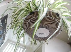 How to turn an old fan cover into a decorative plant hanger