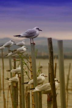 ESTADO D'ALMA /birds