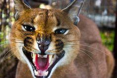 Mdluli Safari Lodge | Estate Living #wildlife in south Africa Kruger National Park, National Parks, Triple Bottom Line, Going To University, Luxury Tents, South Africa, Safari, Wildlife, Animals