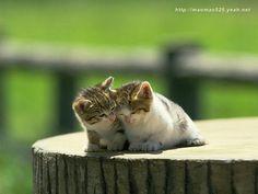 Such Darling Kittens