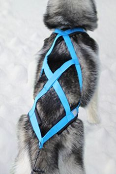 Weight Pulling Dog Harness XBack for Bike Canicross Sled Joring blue * To view further for this item, visit the image link.