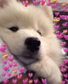 Cute Cat Memes, Cute Love Memes, Dog Memes, Cute Funny Animals, Cute Baby Animals, Cute Cats, Cute Dog Wallpaper, Kawaii, Cute Dogs And Puppies