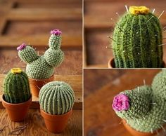 You will love this collection of Crochet Cactus Patterns and we have all the most popular ideas with lots of free patterns and video tutorial included. Crochet Cactus Free Pattern, Crochet Bebe, Crochet Animal Patterns, Crochet Gifts, Knitting Patterns Free, Crochet Toys, Crochet Animals, Crochet Bouquet, Crochet Flowers