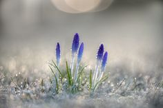 spring ? by Anke Kneifel on 500px