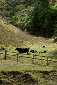 ♥ Norfolk Island Norfolk Pine, Norfolk Island, Fraser Island, Old Fences, Rock Pools, Nice Place, Small Island, Great Barrier Reef, Cook Islands