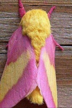 Colorful moth