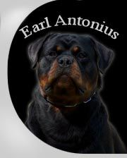 Welcome to www.earlantonius.com Rottweiler Breeders, Welcome, Makeup, Dogs, Animals, Pets, Make Up, Animales, Animaux