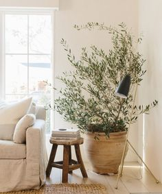 Our CEO Julia Hunter's Venice Home is a Minimalist Dream – Rip & Tan - farmhouse living room furniture Home Living Room, Living Room Furniture, Living Room Decor, Home Furniture, Refurbished Furniture, Retro Furniture, Living Room With Plants, Bedroom Decor, Painted Bedroom Furniture