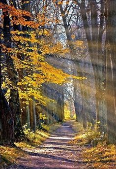 Pathway in autumn [unable to determine location or photographer]