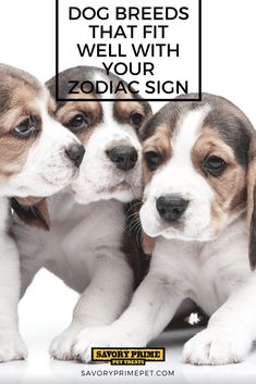 Dog Breeds That Fit Well With Your Zodiac Sign | Savory Prime Pet Treats
