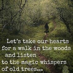 Let's take our hearts for a walk in the woods and listen to the magic whispers of old trees. Image via Wild Woman Sisterhood fb Great Quotes, Quotes To Live By, Me Quotes, Motivational Quotes, Inspirational Quotes, Beauty Quotes, Super Quotes, Quotes On Trees, Quotes About The Woods
