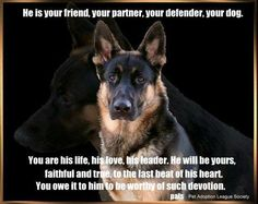 from The German Shepherd Dog Community