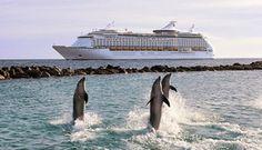 Love dolphins...aka Phocoenidae
