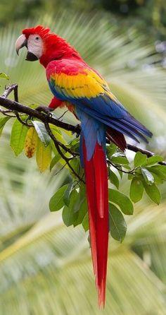 Training Your Pet Parrot All Birds, Cute Birds, Pretty Birds, Beautiful Birds, Animals Beautiful, Cute Animals, Tropical Birds, Exotic Birds, Colorful Birds
