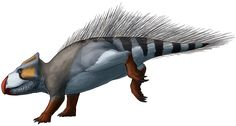 U is for Udanoceratops A leptoceratopsid from the Late Cretaceous of Mongolia, about 75 million years ago, Udanoceratops tschizhovi is estimated to have reached around 4m in length (13ft). The leptoceratopsids were a branch of primitive, small ceratopsians, found mainly in North America – Udanoceratops is the only known Asian representative. They were capable of both bipedal and quadrupedal locomotion, and lacked the more elaborate horns and frills of their larger relatives.